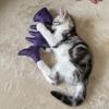 2ヶ月の子猫の噛み癖を治したい!おすすめのおもちゃ紹介