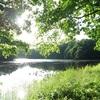 野幌森林公園は楽しい!12 荻野の池の黄色い花は?