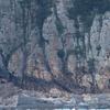 下甑島から串木野へ向かう航路での鳥(2019 0321)