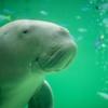 【半額!】シーライフ・シドニー水族館の割引チケットを購入する方法