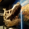 VO2Maxと恐竜学博物館