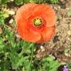 道端の花8