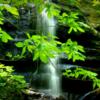 日本の森でのんびり森林浴