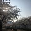 桜ランニング🌸