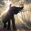"""【ラオスの国家資格⁈】世界遺産の町ルアンパバーンで""""象使い""""になったら人生得した!"""