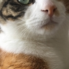 【愛猫日記】毎日アンヌさん#37