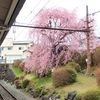 東武日光駅の枝垂桜