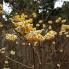【花】春の花を探しに
