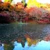 用作公園の紅葉とジョウビタキ♀