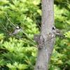 【旅の写真】香港で見た野鳥-シロガシラ