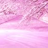「冬に咲くさくらライトアップ」と「弘前城雪燈籠まつり」