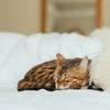 15分で寝落ち!不眠で悩むあなたにおすすめのヨガアプリ【寝たまんまヨガ】の効果がすごい