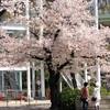 春の東山動物園