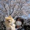 お花見 2012 準備進行中編