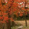 糺ノ森の紅葉
