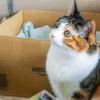 【愛猫日記】毎日アンヌさん#139