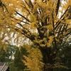 秋と冬の混在
