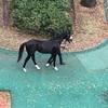 スピリチュアルな馬、モーソンピークは新馬戦4着。目に見えない力は発揮できず。外国の競馬よろしく、出馬投票後の取消は出来ないのかな?