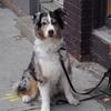 モントリオールで飼い主を待つ犬