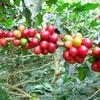 【キーコーヒーが何だか凄い】新加工技術「KEY Post ポスト ‐Harvest  ハーベスト Processing プロセッシング 」を開発