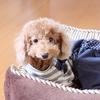 保護犬だったプーちゃん、恐怖のお散歩が。動画あり。