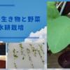 我が家の生き物と野菜たちと水耕栽培