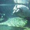 「天王寺動物園 春のナイトZOO」と、意外と便利で子連れにやさしいJR天王寺駅周辺で春休みを満喫