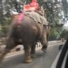 インド旅行3【ジャイプール前半】