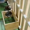 ウサギのちまき今日の1枚『お尻がお茶目』