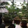 植物たちは元気でした!