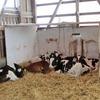 ウシの一生:新生子牛と初乳