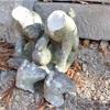 神社のキツネ像を壊した容疑、韓国籍の男逮捕 先月入国