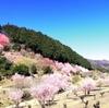 春を探しに桃源郷へ