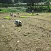 自然農七畝組 田植え