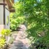 立夏〜   庭の茶花