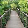 タイ・バンコクで自然再生・創造の動き/Nature Restoration & Creation in Bangkok of Thailand