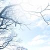 み ん な の 木