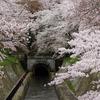 2016年4月5日。琵琶湖疏水の桜。三井寺→山科→蹴上。