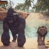【コナンアウトキャスト】新ペット!ゴリラやライオンを拠点で飼う方法