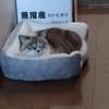 【最近】我が家の庭~猫~ラーメン~酢豚