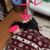 甲斐犬サンのひとり遊び〜Σ(° x °U)友達イナイカモッ⁉︎⁉︎
