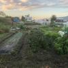 """畑からこんにちは! 1027  """"  朝の畑はマイナスイオンで溢れてる! """"    #家庭菜園 #野菜 #秋野菜 #園芸"""