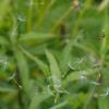 蜘蛛の巣に綿毛