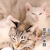 超カメラ音痴が室内の猫を撮るために選んだCanon EOS Kiss X7