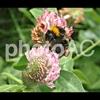 写真AC:ハチの写真