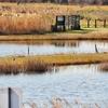 北方遊水池の棚池(千葉県市川)