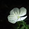 今更ながら…夜の植物園の話