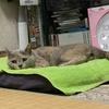 御朱印集め 猫の気持ち16(奈良公園の鹿)