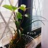 苔玉水やりと新芽