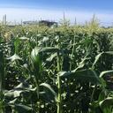 アグリパーク南陽体験農園のブログ